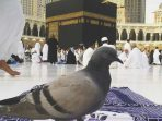 Kisah Burung Merpati di Zaman Nabi